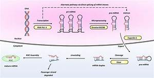 Micrornas In Cardiovascular Disease  An Introduction For Clinicians