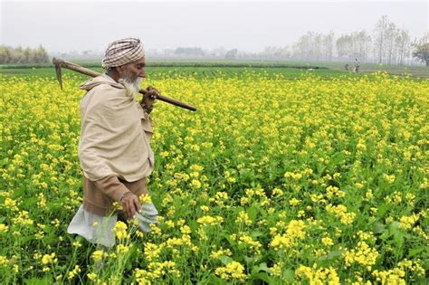 Punjabi farmer history and culture, from sowing the land ...