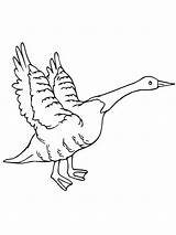 Goose Flying Coloring Geese Canada Pages Drawing Netart Printable Getcolorings Getdrawings sketch template