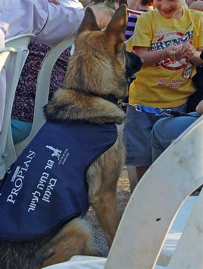 Dog Guide Dogs Wikipedia Blind Training Israel