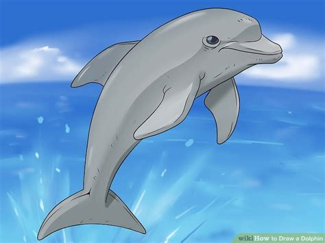 draw  dolphin  steps  pictures wikihow