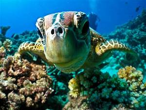 Beyond Gorgeous: Great Barrier Reef (46 PICS)