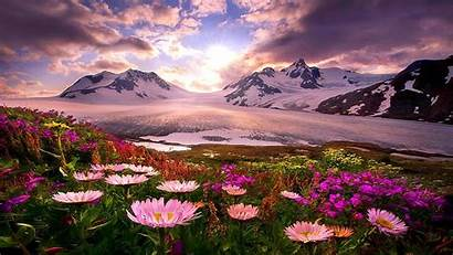 Alaska Wallpapers Spring Landscape Flower Mountain Nature