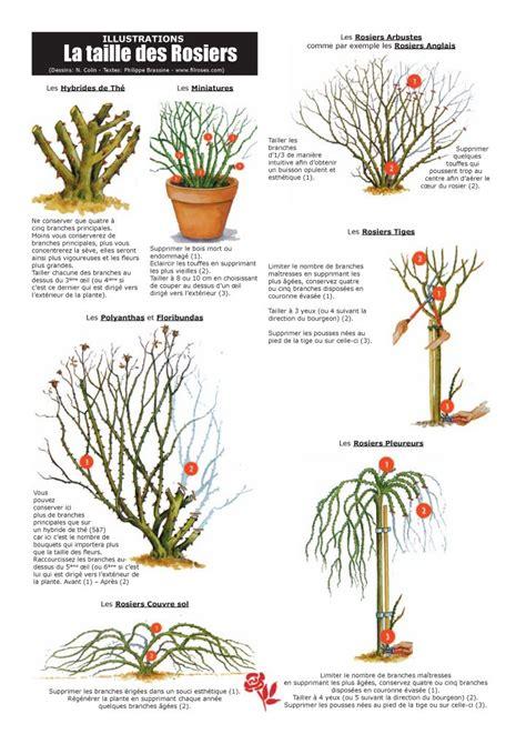 quand tailler les agrumes en pot quand tailler les hibiscus en pot 28 images tailler et