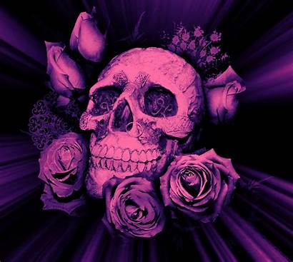 Skull Purple Roses Skulls Cat Itl Wallpapers