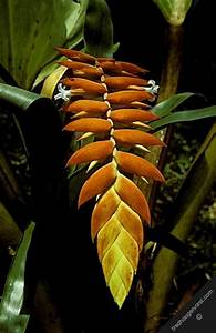 south america french guiana tropical rainforest flora ...