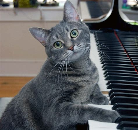 cat songs wisconsin scientists create bach for