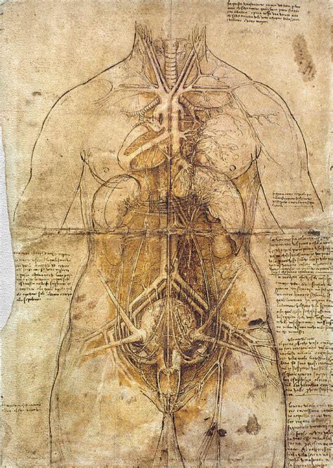 Leonardo Anatomical Drawings