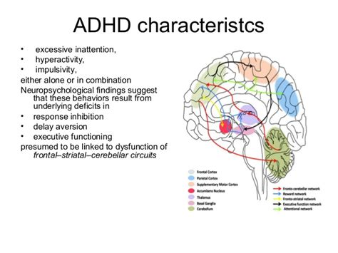 Diagram Of Adhd by How Adhd Affects The Brain Pictures To Pin On