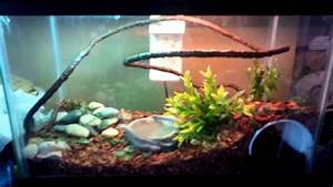 Green anole set up 10 gallon - YouTube