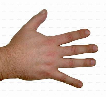 Hand Human Textures Male Hands Fingers Clipart