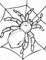 Coloring Pages Spider Printable Insect Adult Insects Colouring Bug Sheets Animal Ladybug sketch template