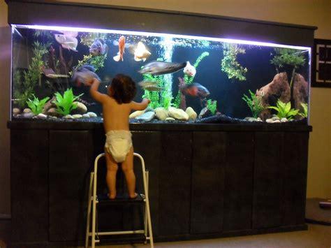 gallon monster freshwater aquarium   home