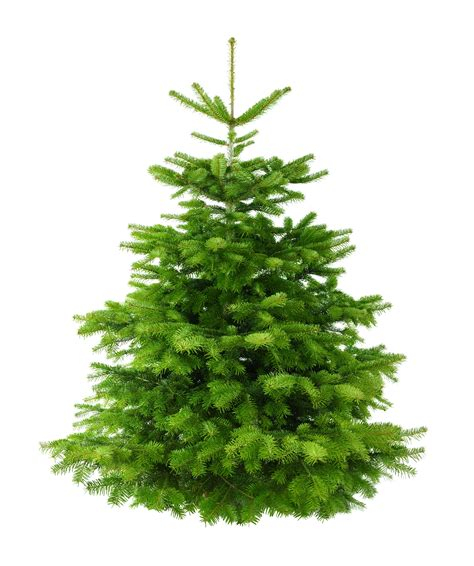 8ft Christmas Tree Artificial by 5ft Nordman Fir Low Needle Drop