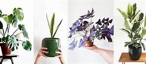 Marc De Café Plantes D Intérieur : les 7 plantes tendance du moment monstera pilea tr fle pourpre ~ Melissatoandfro.com Idées de Décoration