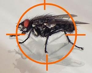 Comment Se Débarrasser Des Souris Dans Une Maison : comment se d barrasser des mouches dans sa maison sos tracteur ~ Nature-et-papiers.com Idées de Décoration