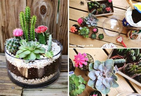 how to make simple indoor cactus garden step by step