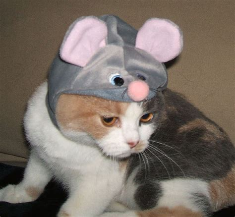 Funny Image Collection Top Funny Cat Halloween Pictures