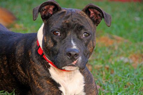 image home dog training austin texas