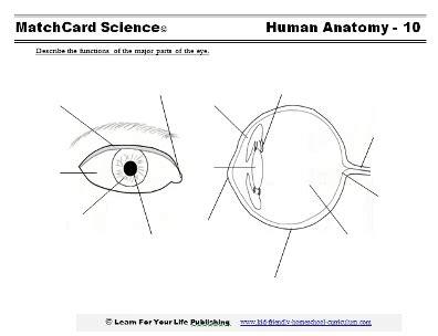 Label Eye Diagram Ks2 by Science Worksheets