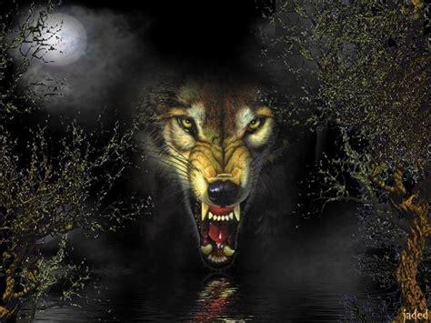 Fierce Animal Wallpapers - fierce wolf wallpaper hd