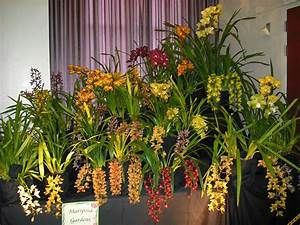 South Bay Orchid Society