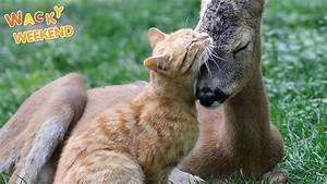 Wacky Weekend: Animal Friendships  Animal