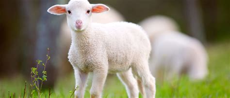 Laws that Protect Animals - Animal Legal Defense Fund