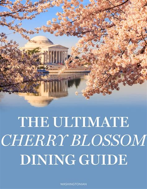 17 best images about cheery 17 best images about cherry blossoms dc on