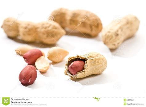 Peanut Royalty Free Stock Images Image 4267959