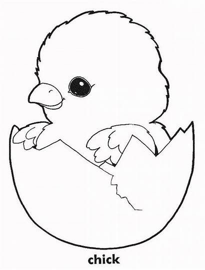 Coloring Chicken Chick Easter Printable Chickens Chicks