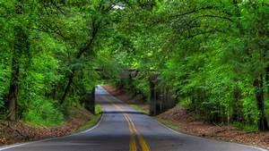 Road trees bridge landscape tree forest f wallpaper ...