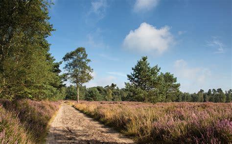 Photography, Nature, Landscape, Trees, Path, Field, Plants