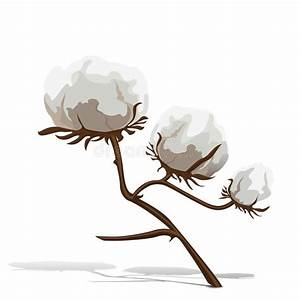 Part Of Cotton Plant On A White Background  Stock Vector