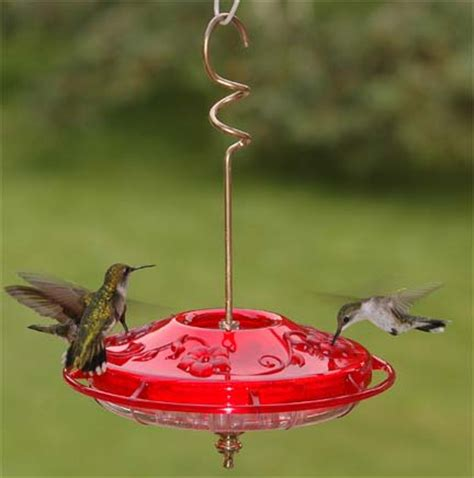 how to clean your hummingbird feeder