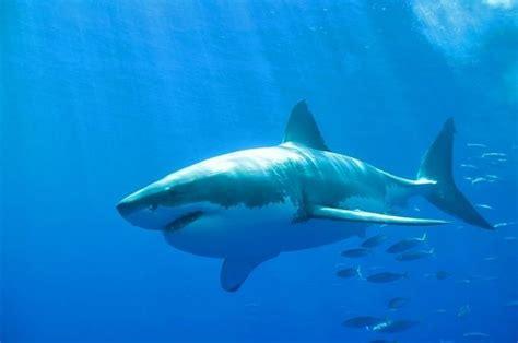 woman attacked  shark alley  vero beach girl