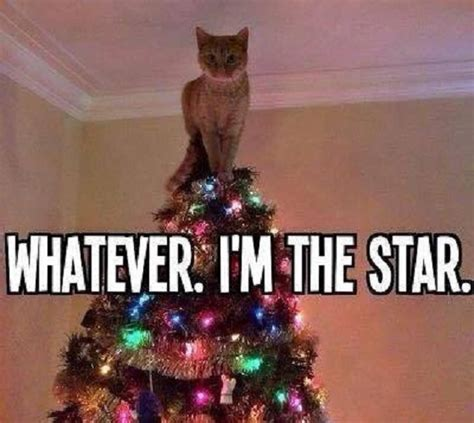 Cat Christmas Memes - i m the star funny pictures quotes memes jokes