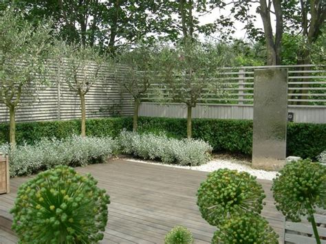 trees for modern landscape 34 best images about gray green garden on pinterest gardens mediterranean garden and cactus