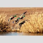 Duck Hunting Wa...