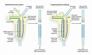 What Is Crispr  Cas9 And Why Is It Suddenly Everywhere