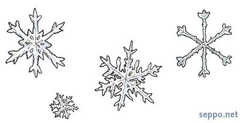 luonto muu lumihiutale sepponet luontokuvia ja