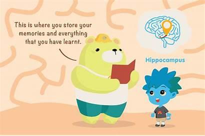Brain Pathways Brains Explain Memory Neural Message
