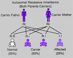 The Diagram Below Illustrates Autosomal Recessive Inheritance