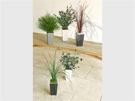 plantes de bureau sans soleil plantes de bureau sans soleil justement question plantes