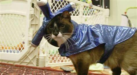 jetzt wirds tierisch die witzige welt der katzen sat