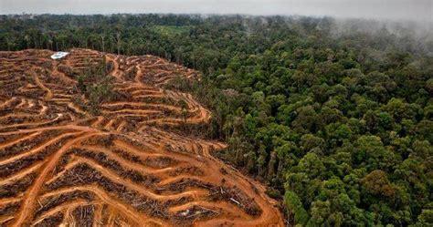 abholzung des regenwaldes  lateinamerika nimmt zu