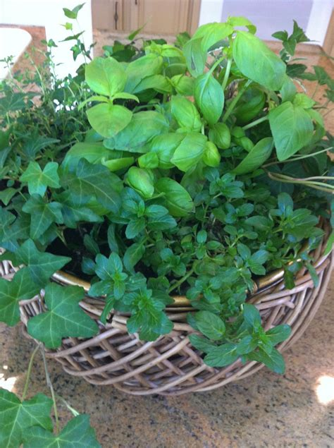 herb container garden nothing but blue skies indoor herb container garden how to