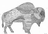Buffalo sketch template