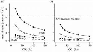 Evolution of C4 plants: a new hypothesis for an ...