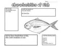 basic fish diagram fins labeled fish lesson fish science fish anatomy